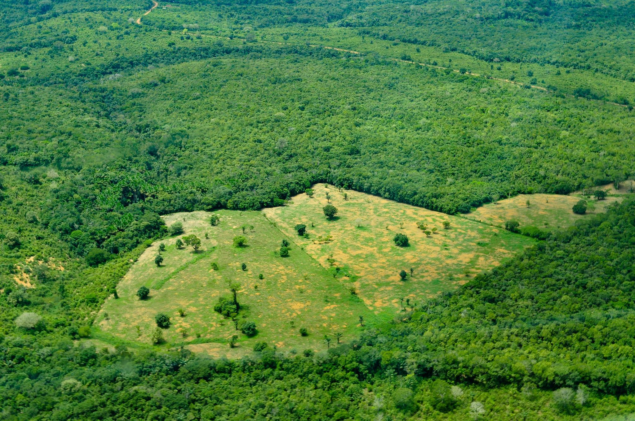 amazon rainforest deforestation - HD2048×1360