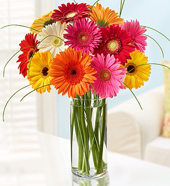 COLORFUL WORLD OF GERBERA DAISIES in Clarksville  TN   FLOWERS BY     COLORFUL WORLD OF GERBERA DAISIES