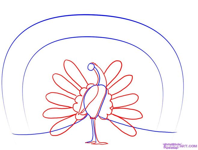 How to draw a peacock with a pencil (step 3)