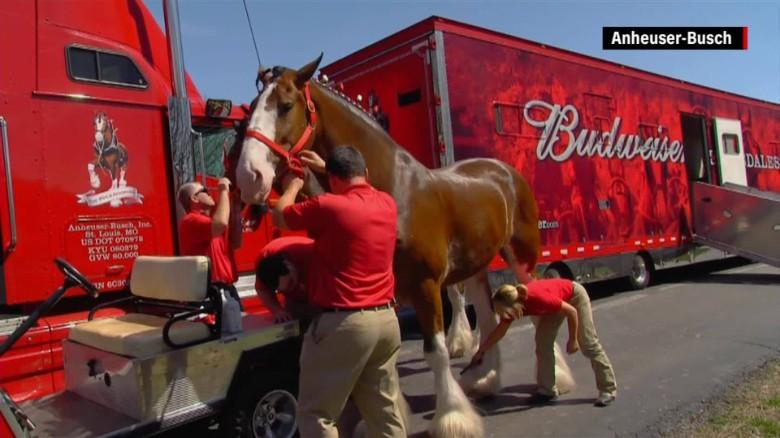 Schedule Budweiser Clydesdales Hitch