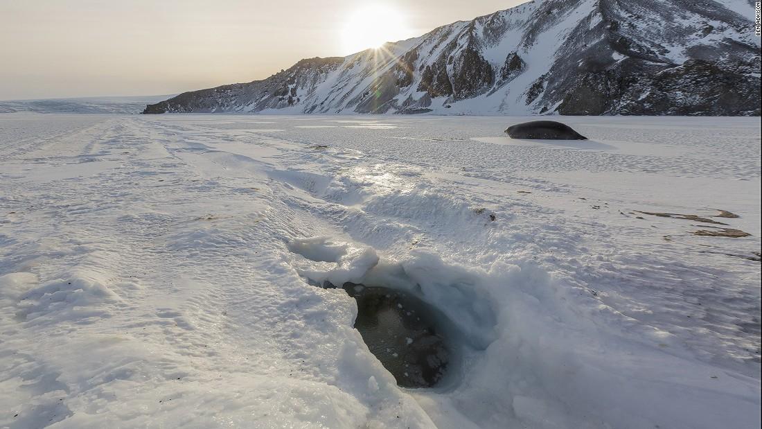 Penguins Iceberg Frozen Antarctica