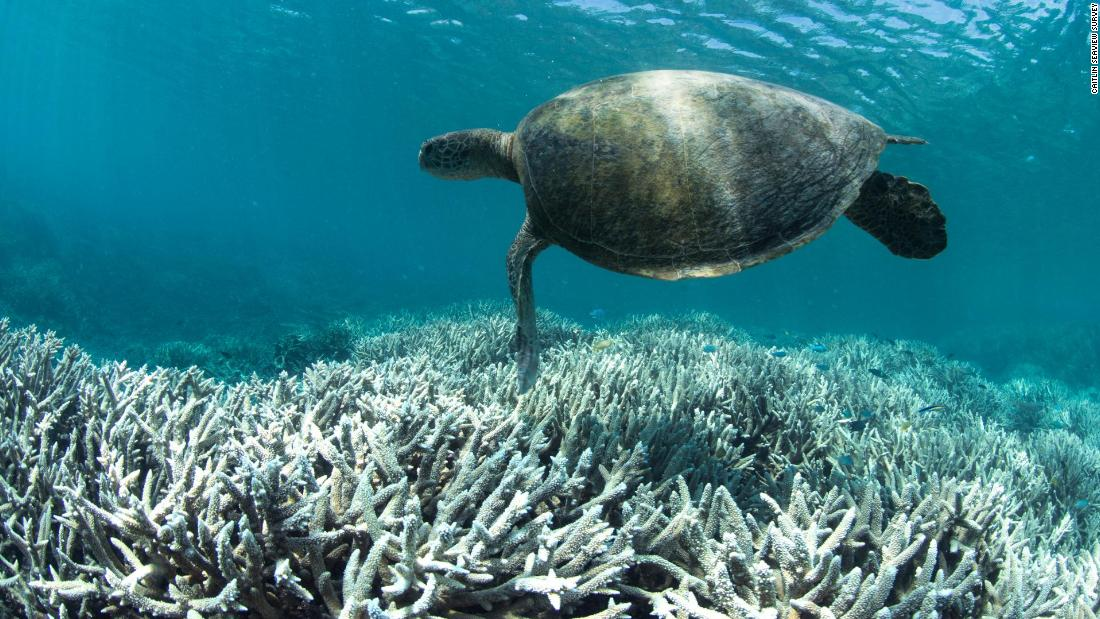 Cruise Ship Spills Waste In The Great Barrier Reef