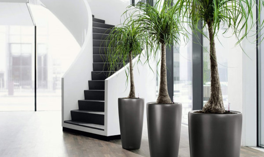 Charlotte Plantscapes Inc Charlotte Office Plants Interior Indoor Plant And  Flower Care For Office Artificial Plants For Decorating SimplyMaggie Com Ok  Let ...