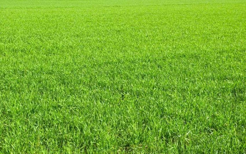 Best Soil Vegetable Garden