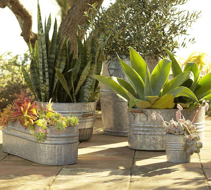 Succulents Big Pots
