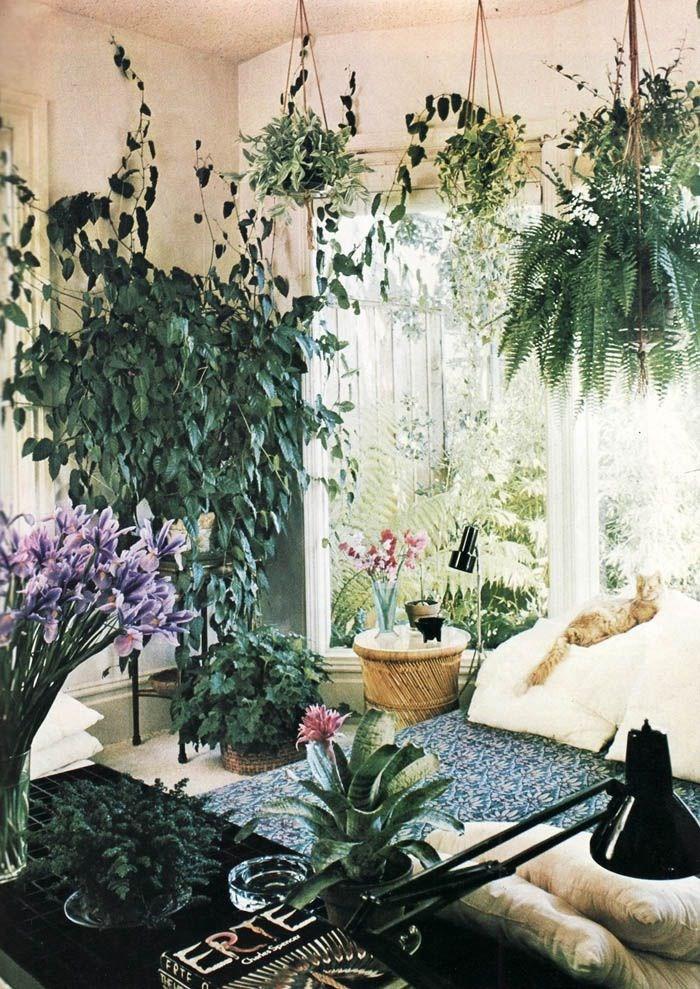 Apartment Decorating Plants