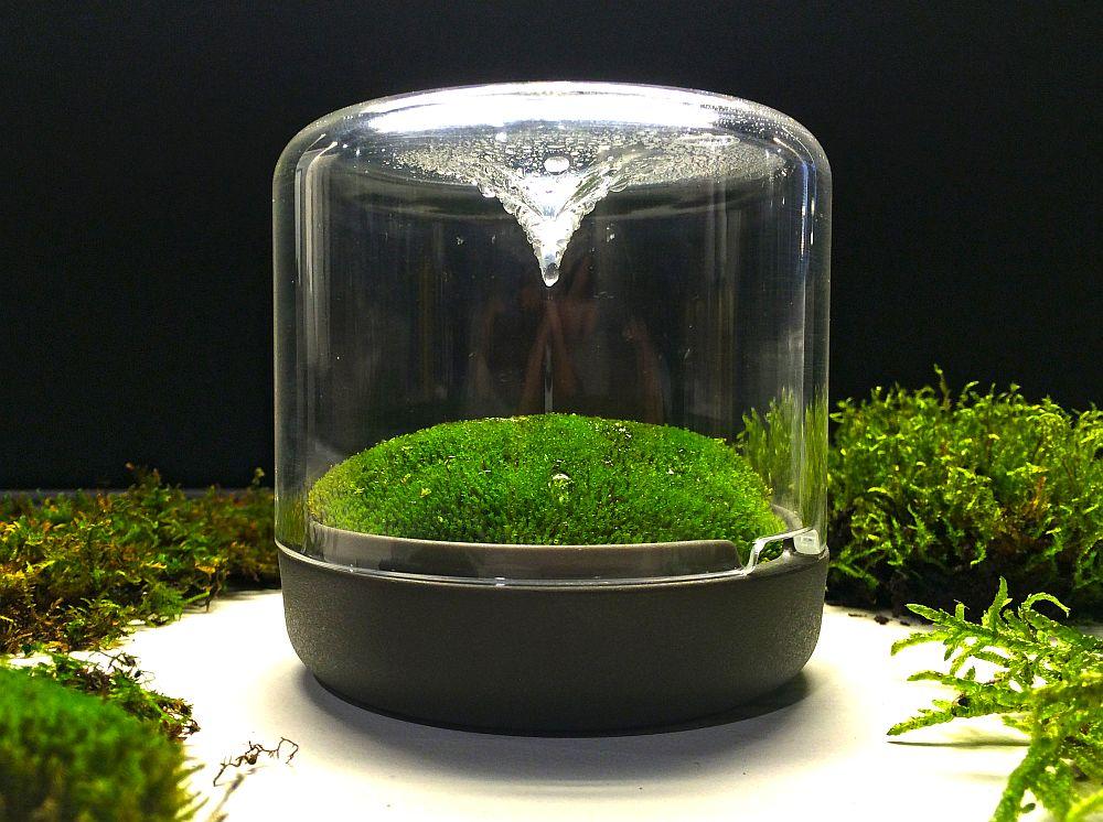 Aquarium Interior Design