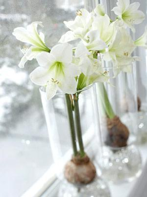 White Amaryllis Glass Vases Christmas Decoration