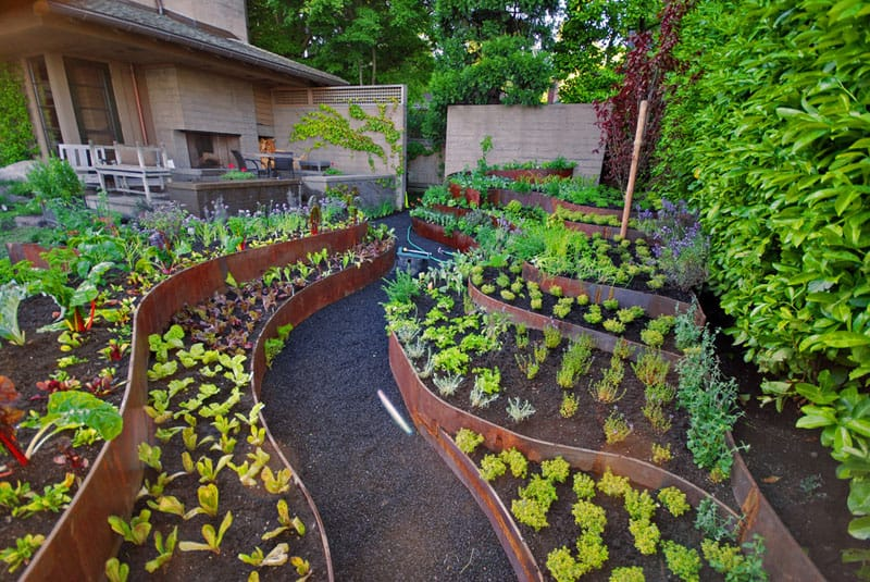 Above Ground Vegetable Garden Layout