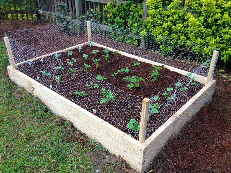 Building Raised Herb Garden Box