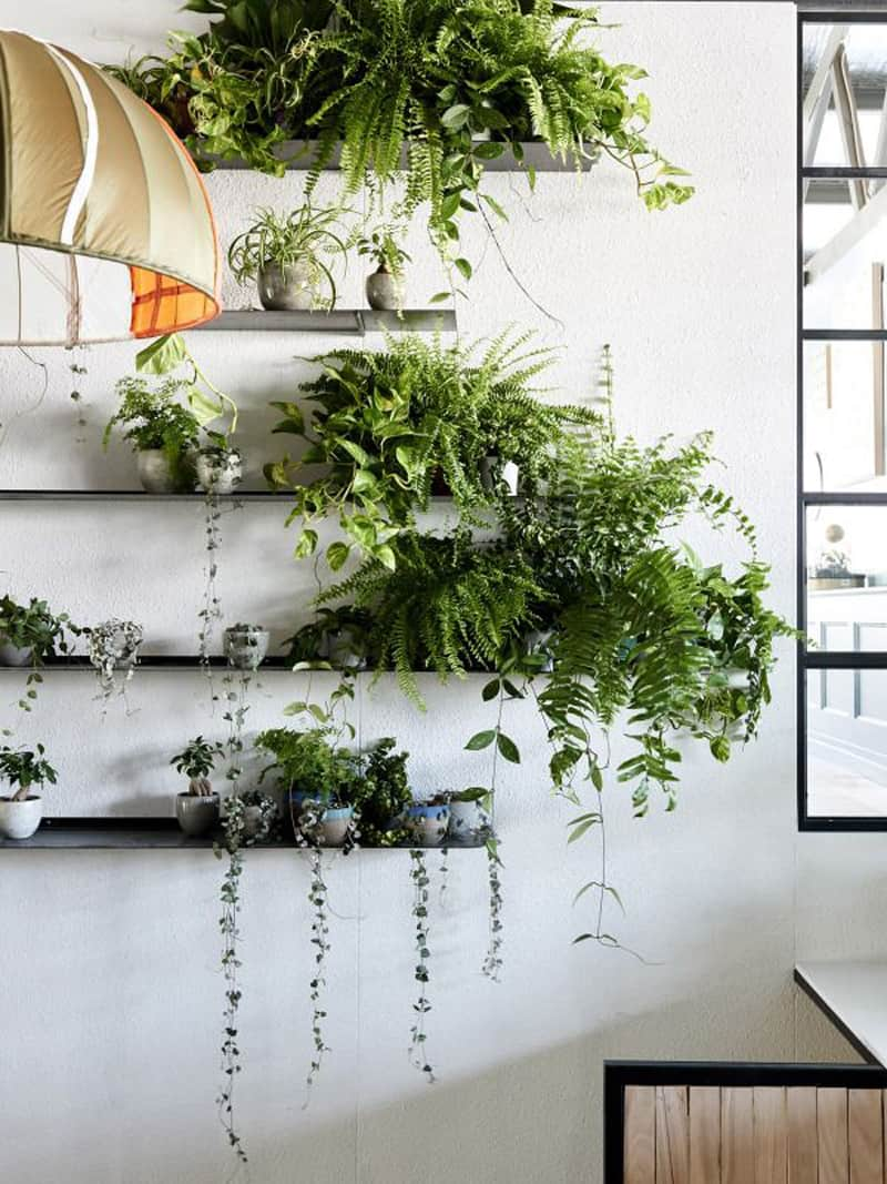 Wall Mounted House Plants
