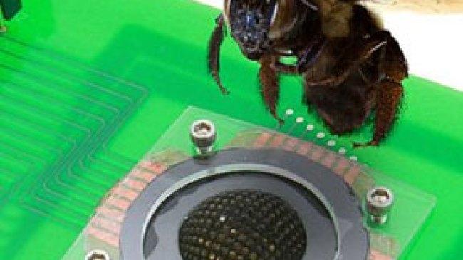 Kamera Ini Mengadopsi Teknologi Mata Serangga