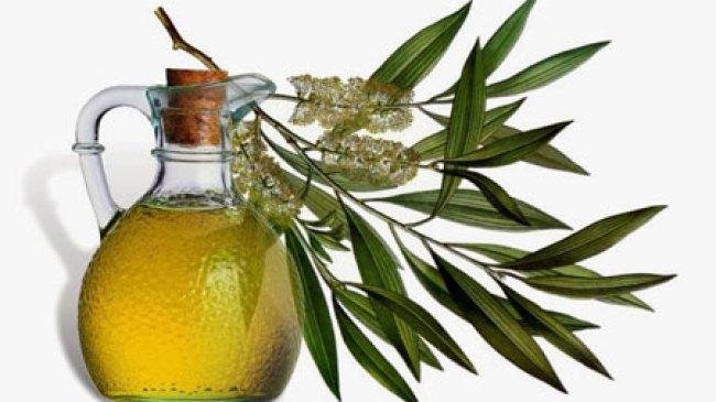 Minyak Tea Tree Simpan Khasiat Yang Baik Untuk Kesehatan
