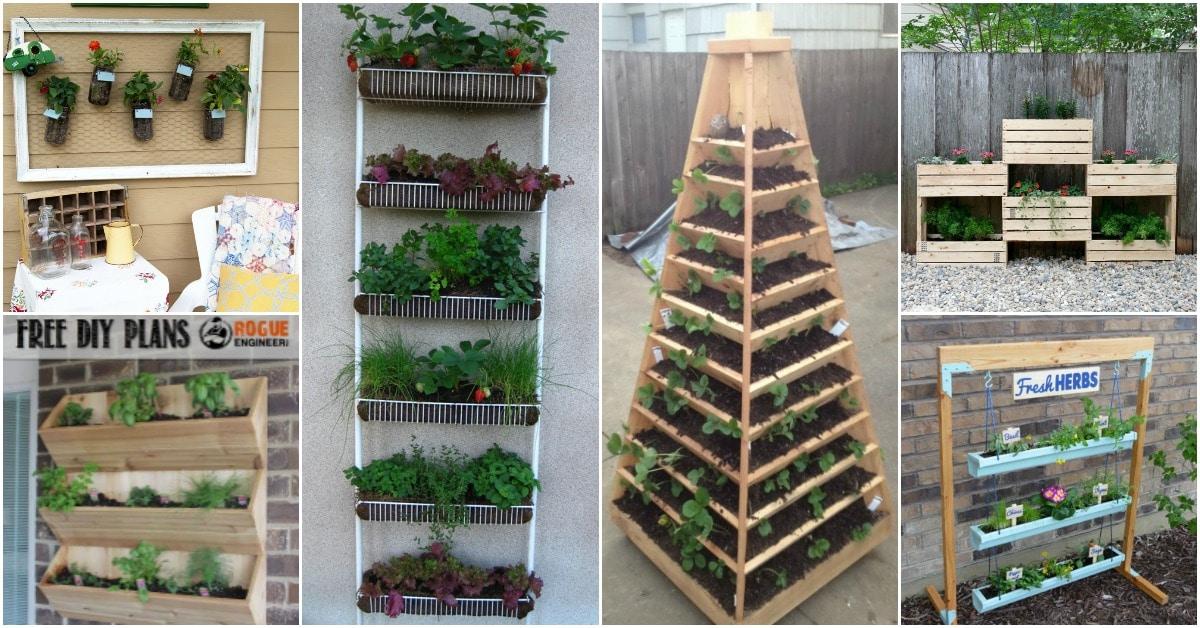 Strawberry Plant Family