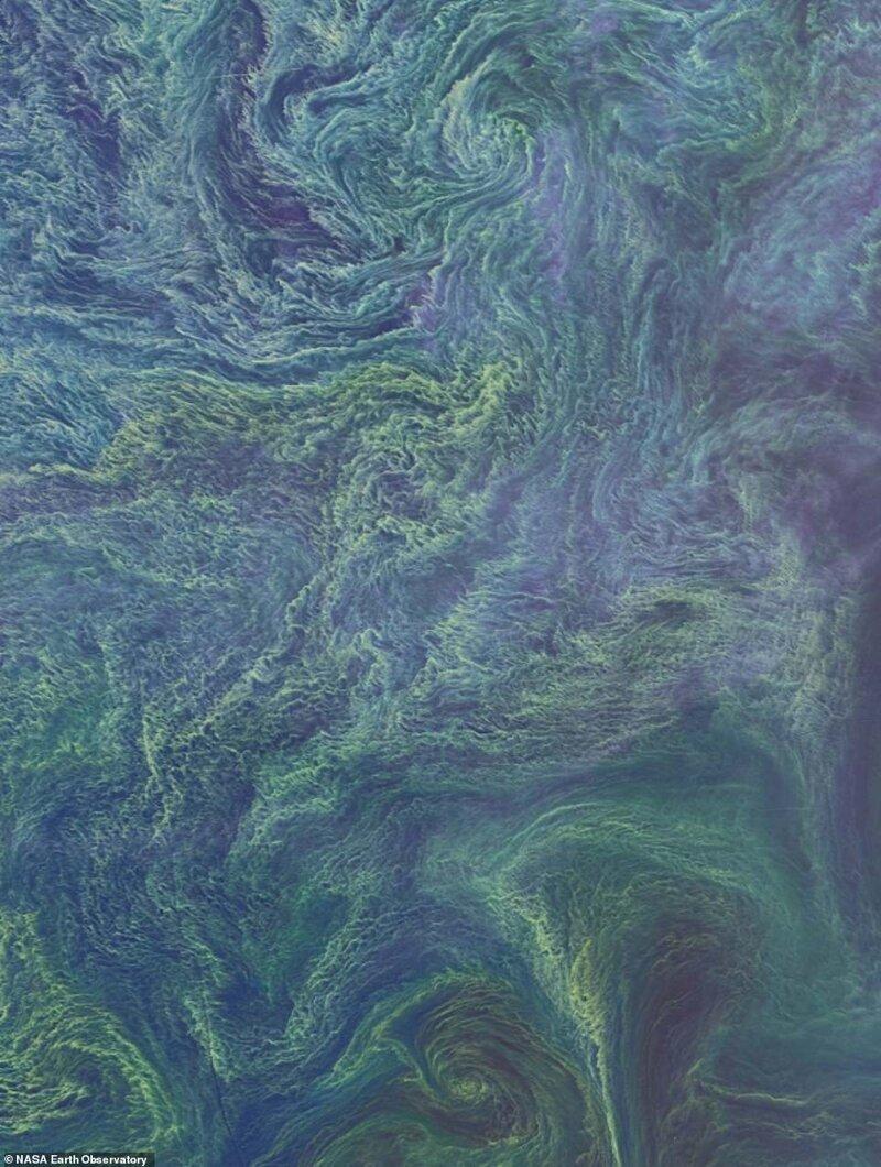Балтық теңізіндегі алып теңіз бактериялары. Landsat 8 жер серігінен 2015 жылдың тамыз айында жасалған суреттер