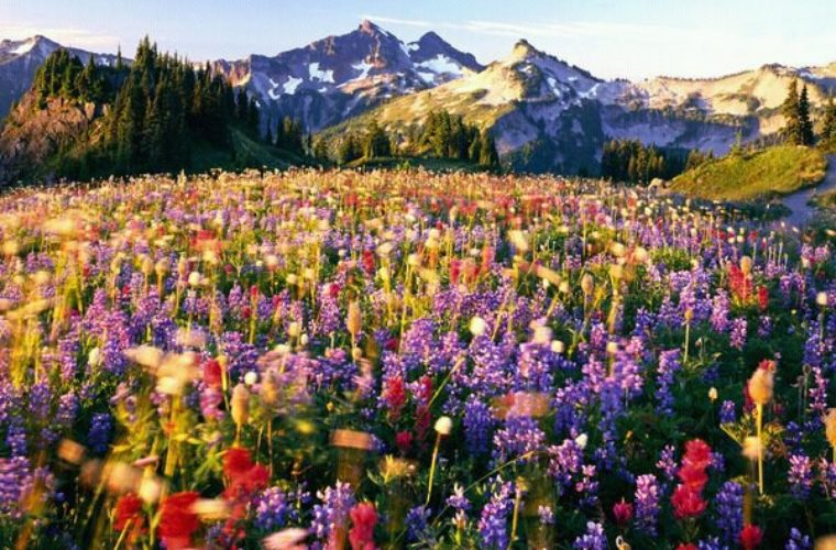 Flowers on Mount Rainier   Funny Pictures  Quotes  Memes  Funny     Flowers on Mount Rainier