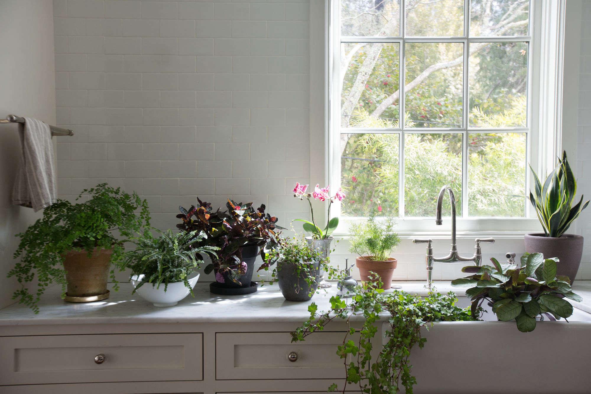 Best Kitchen Gallery: Best Houseplants 9 Indoor Plants For Low Light Gardenista of Tropical Ivy House Plants on rachelxblog.com