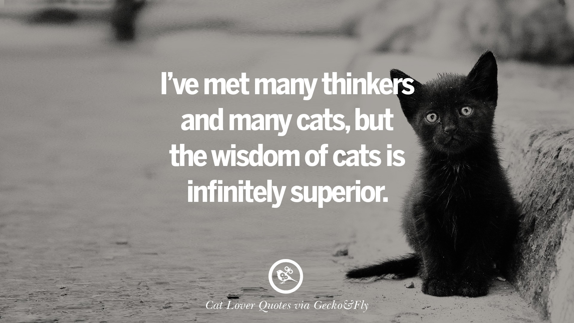 Cute Cat Sayings And Quotes