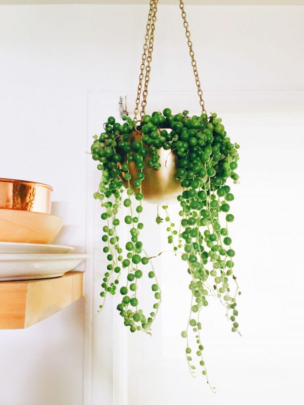 Indoor Hanging Plants Flowers