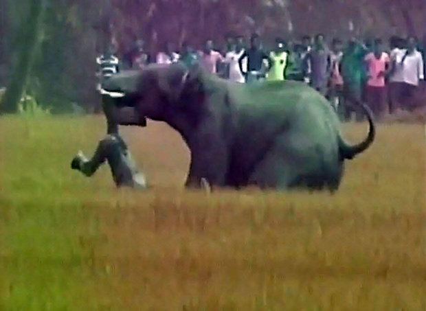 Watch Herd Of Wild Elephants Go On Stampede Killing Four