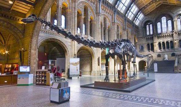 Diplodocus Dinosaurs History