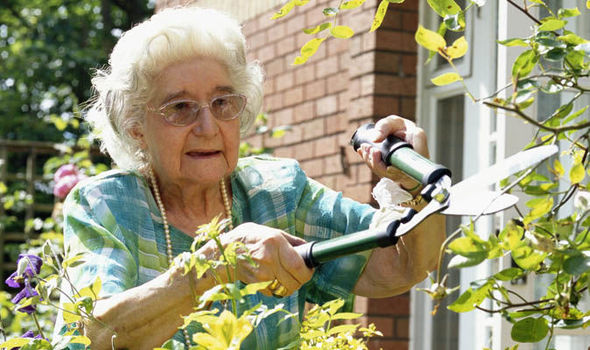 Top tips for older gardeners to help avoid injuries ...