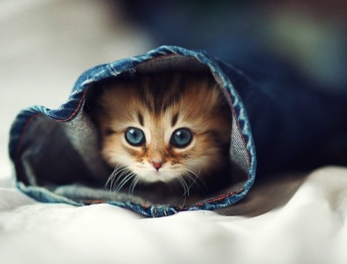 Котенка үшін үй