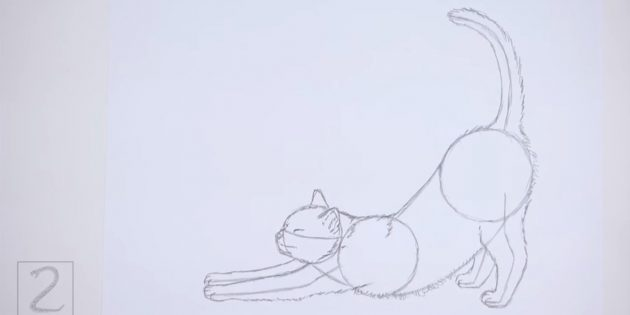 Imaginez une fédération le long du ventre du dos et du chat. Dessiner la queue