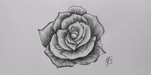Как нарисовать раскрытую розу карандашом