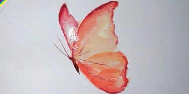 How to draw a realistic butterfly with paints