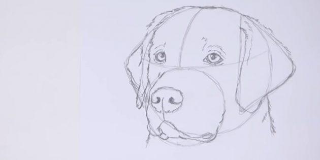 Esboço de contorno da orelha esquerda e retratar a empresa no pescoço e na cabeça