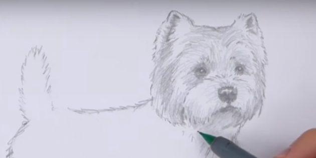 Cabeça do cão de ataque