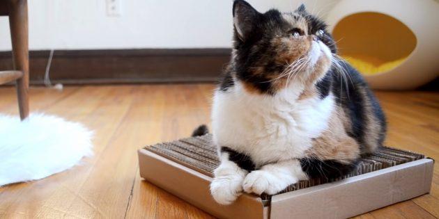 Hoe maak je een crawler van karton met je eigen handen