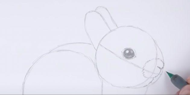 Cách vẽ thỏ: Chi tiết mõm