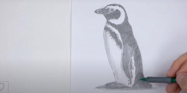 पेंगुइन कैसे आकर्षित करें: छाया जोड़ें