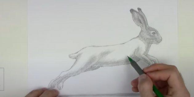 Sådan tegner du en hare: Monter næsepartiet