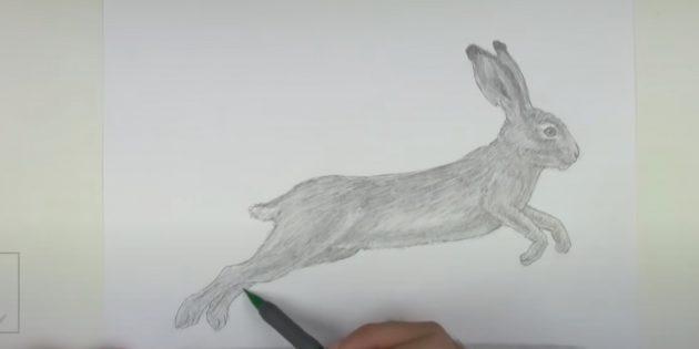 Hvordan man tegner en hare: Creek kroppen