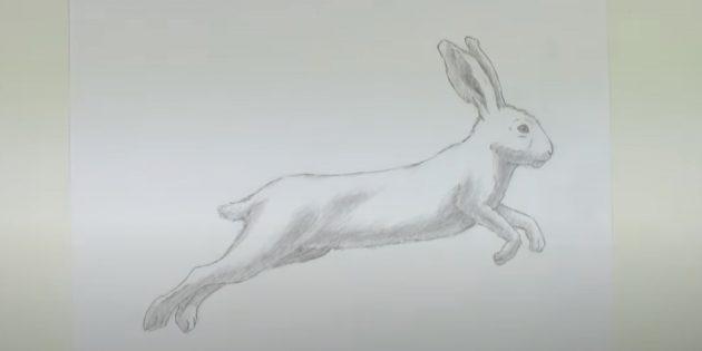 Làm thế nào để vẽ một cái thỏ rừng: bồn chồn bụng