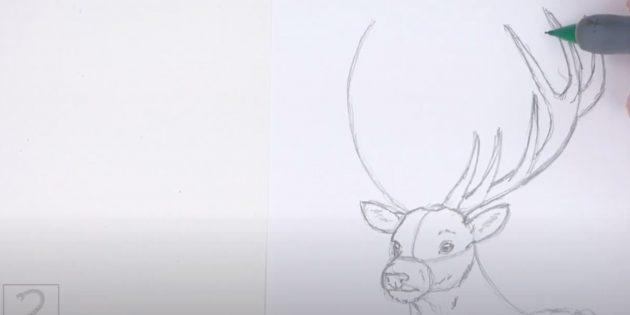 Miten tehdä hirvieläin: Piirrä vasen sarvi