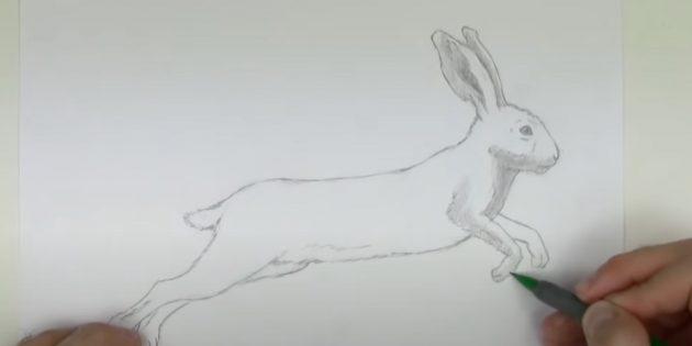 Làm thế nào để vẽ một cái thỏ rừng: Bắt đầu vẽ một con thỏ