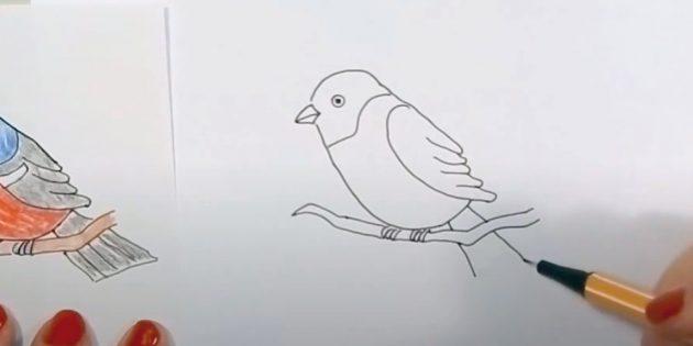 كيفية رسم Bullfiner: تصور العينين والثديين
