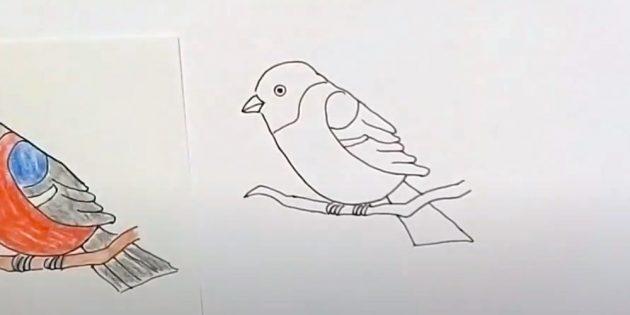 Hvordan tegne Bullfinch: Bilde en rygg