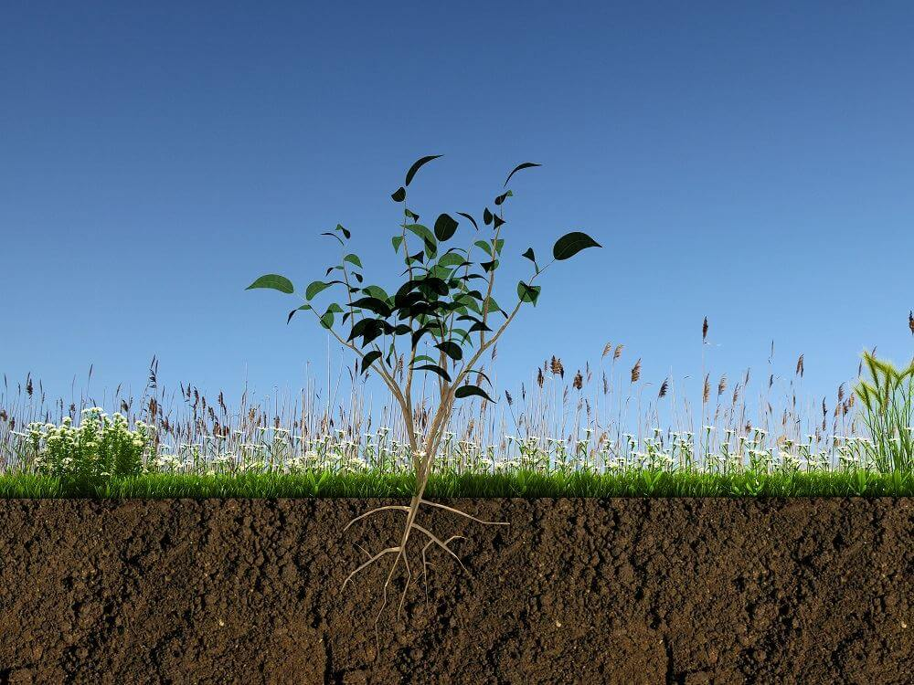 What is Arbuscular Mycorrhizae (AM)? - Definition from ...