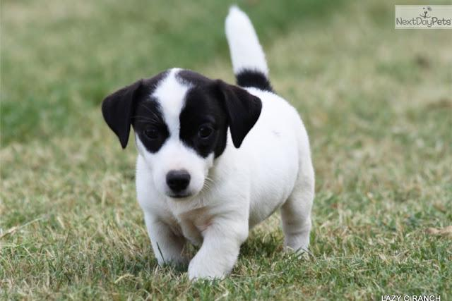 Images Black And Jack White Russell Foxys