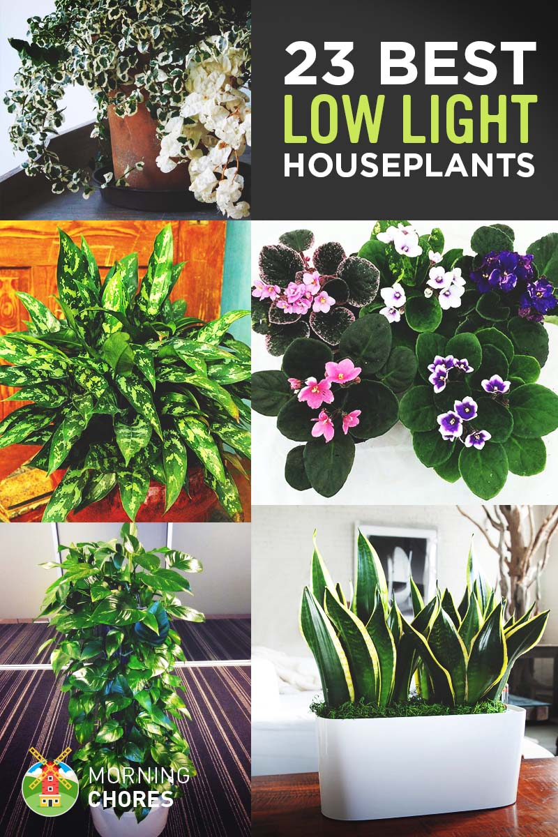 Best Kitchen Gallery: 23 Low Light Houseplants That Are Easy To Maintain Even If You're Busy of Tropical Ivy House Plants on rachelxblog.com