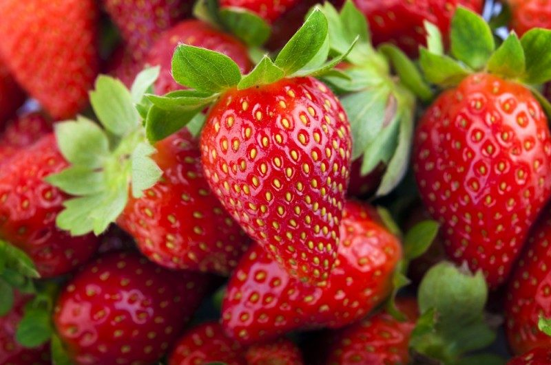 Growing Strawberries How To Plant Grow And Harvest