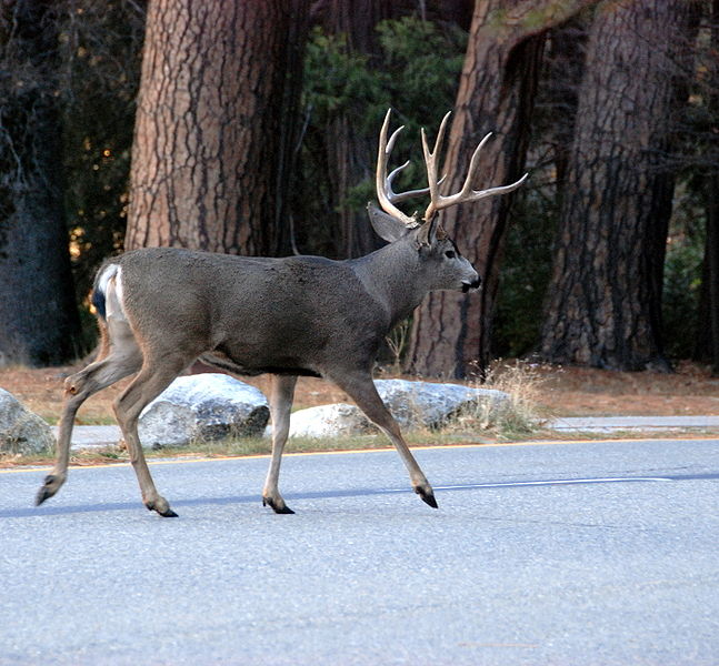 What Are Humans Doing Protect Mule Deer
