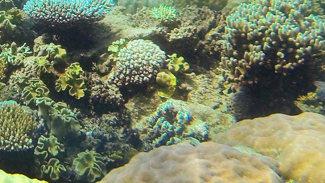Death of scuba diver on Great Barrier Reef under ...