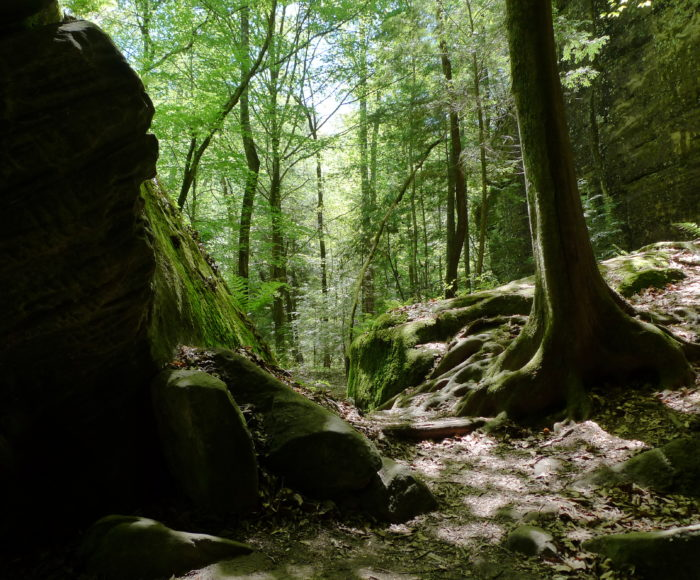 Dismals Canyon A Secret Spot In Alabama Only Locals Know About
