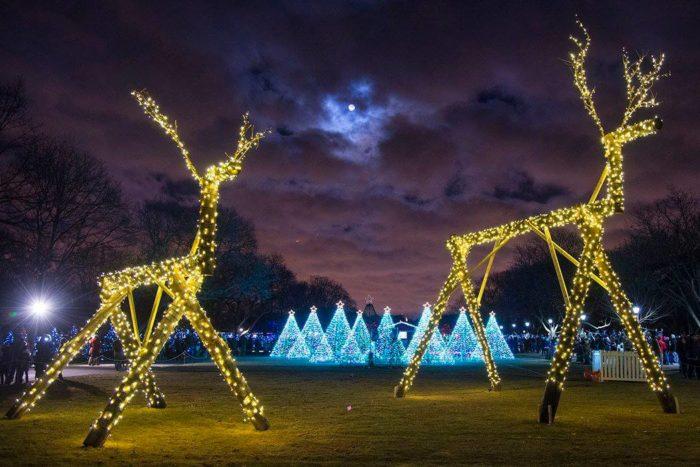 Brookfield Zoo Lights Price